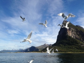 When getting fish, the seagulls wants their part!
